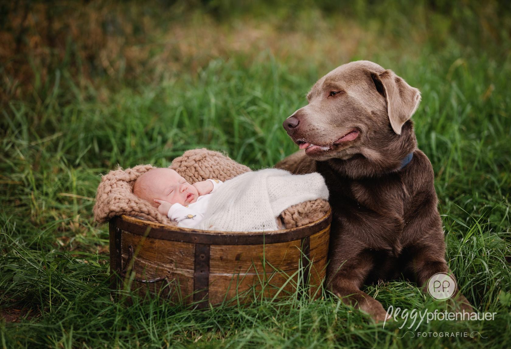 Babyfotos mit Hund