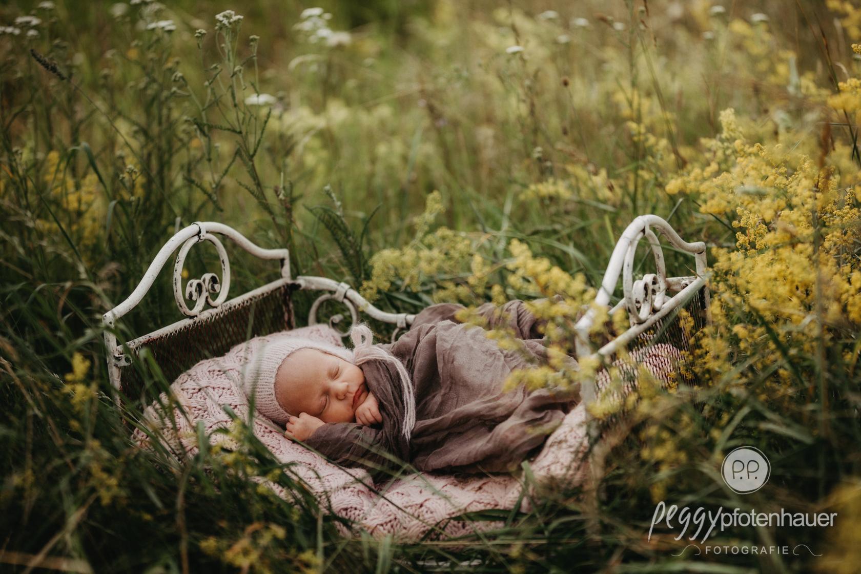 Babyphotos in der Wiese